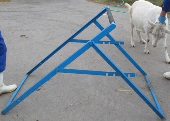 山羊保定台セッティング