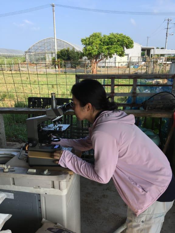 顕微鏡で凍結精液の精子の状態を確認