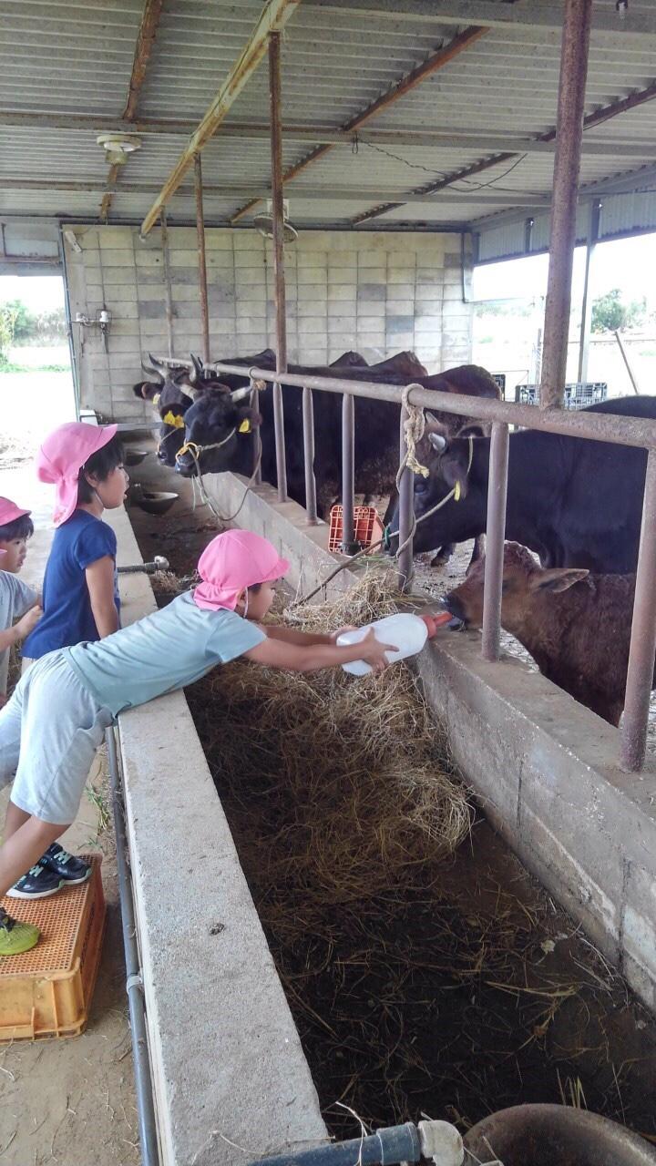 子牛にミルクをやる子ども