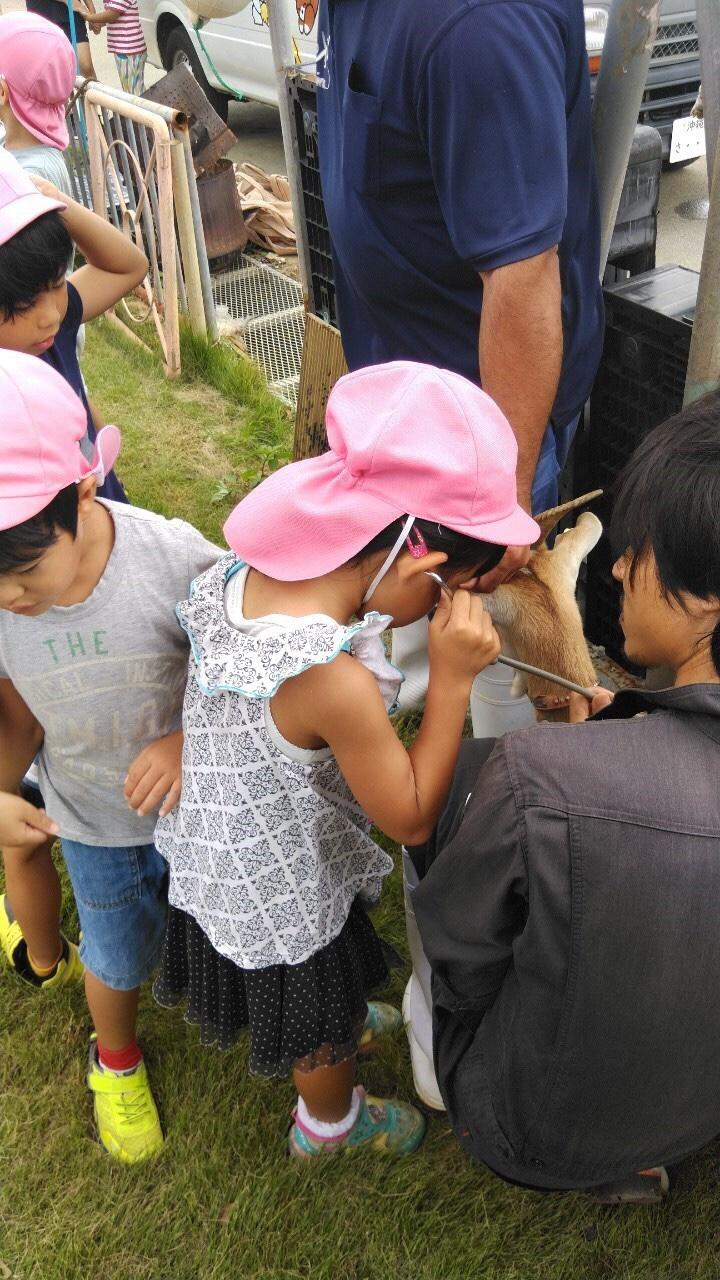 ヤギに聴診器を当てる子どもたち