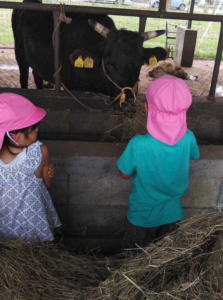牛と子どもたち