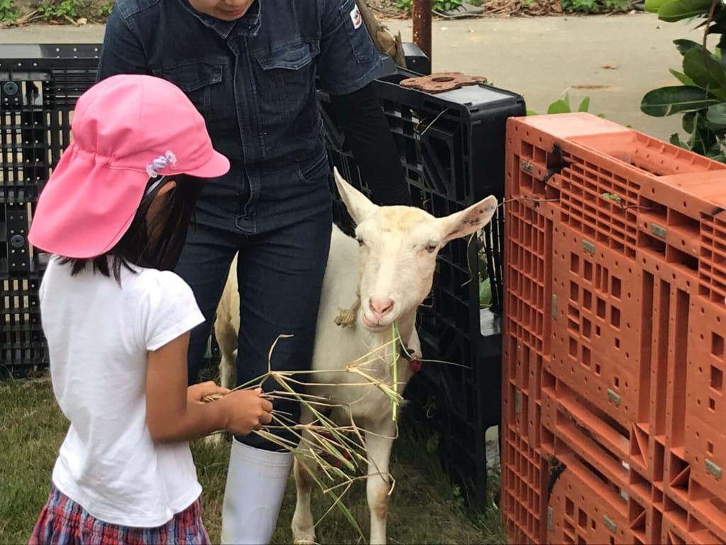 ヤギと女の子